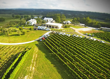 vineyards in Texas
